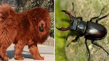 معرفی عجیبترین و گرانترین حیوانات جهان که فروخته شدهاند!