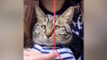 عکسالعمل جالب گربه از نخ شدن سوزن / فیلم