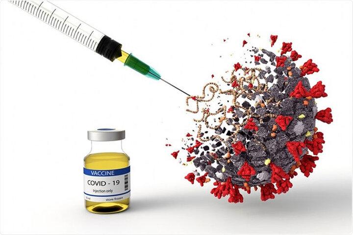 تاثیر میزان واکسن زدن بر تلفات کرونا / عکس