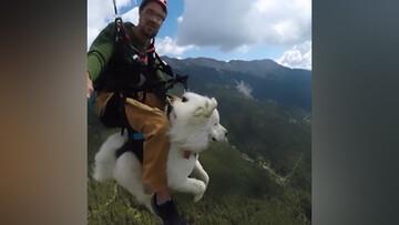 ویدیو جالب از  سگ پاراگلایدر سوار بر فراز آسمان!