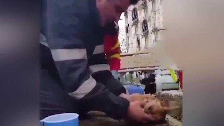 تنفس دهان به دهان آتشنشان برای نجات جان سگ / فیلم