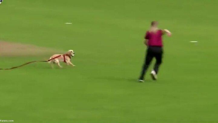 توقف مسابقه ورزشی به دلیل فرار سگ با توپ کریکت / فیلم