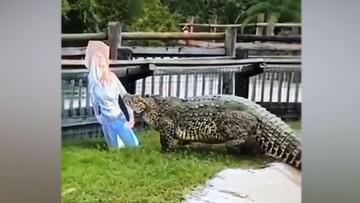 حمله عجیب و خندهدار کروکودیل عظیمالجثه به ماکت زن! / فیلم