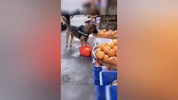 ویدیوی جالب از سگی که به تنهایی میوه میخرد!