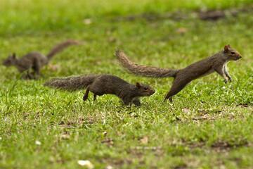 تعقیب و گریز خندهدار دو سنجاب بازیگوش روی تنه درخت / فیلم