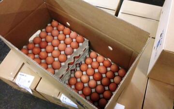 قیمت مصوب تخم مرغ اعلام شد/ هر شانه تخم مرغ چند؟