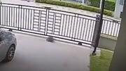 بازکردن عجیب درب منزل توسط لاکپشت زرنگ / فیلم