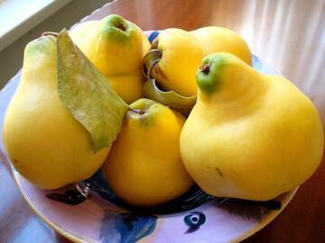 بالا بردن سیستم ایمنی بدن با مصرف این میوه خوشمزه