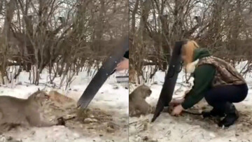 نجات گربه وحشی گرفتار شده در تله توسط زن مهربان / فیلم