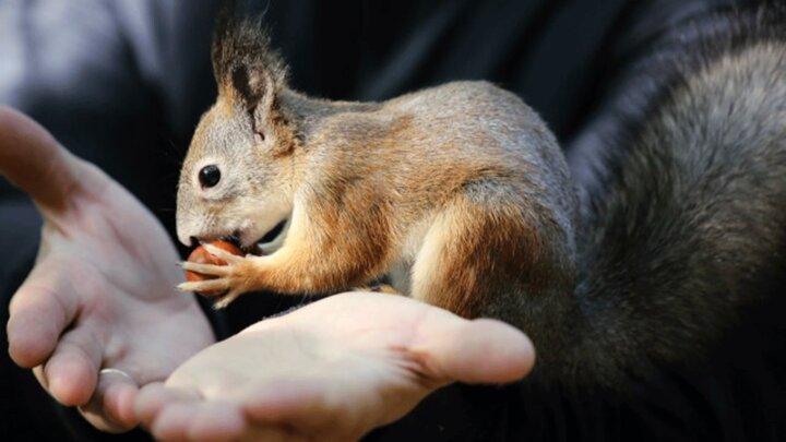 ویدیو جالب از سنجاب بامزه و حرف گوشکن
