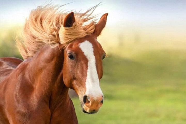 ویدیو تماشایی از لحظه عجیب راه رفتن اسب روی ۲ پا!