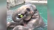 ویدیو دیدنی از لحظه هندوانه خوردن حیوانات مختلف؛ از فیل تا خفاش!