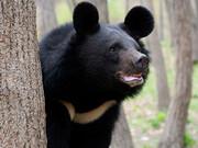 مرگ مبهم نادیا خرس کمیاب بلوچی