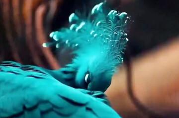 تصاویری دیدنی از یک کبوتر زیبا / فیلم