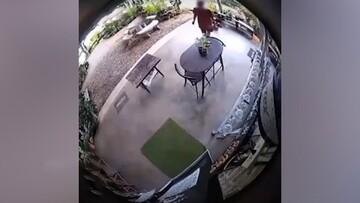 ویدیو هولناک از حمله وحشتناک مار غولپیکر به مرد جوان!