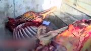 تصاویری تلخ و وحشتناک از سلاخی الاغ و اسب برای فروش در تهران / فیلم