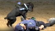 ویدیویی باورنکردنی از ماساژ قلبی توسط یک سگ