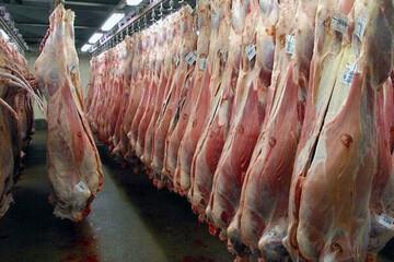 دستگیری افرادی که قصد داشتند گوشت اسبهای بیمار را به خورد مردم بدهند / فیلم