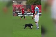 ویدیو جالب از سگ فوتبالیست که عاشق لایی زدن است!