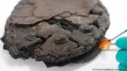 یک کیک ۷۹ ساله سالم در آلمان کشف شد! / عکس
