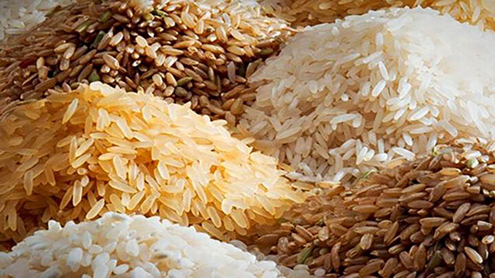 آغاز توزیع یارانه برنج  / چطور برنج ارزان دولتی بخریم؟