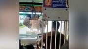 حمله فیل عصبانی به اتوبوس گردشگران / فیلم