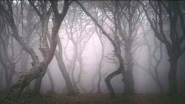 ترسناکترین و عجیبترین جنگل ایران کجاست؟ / عکس