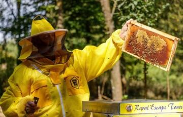 در کرواسی برای زنبورها هتل افتتاح شد!