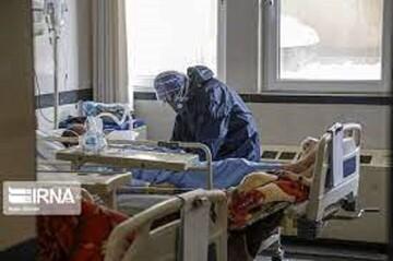 بستری ۱۸۷ بیمار مبتلا به کرونا در بیمارستانهای استان بوشهر