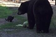 رویارویی عجیب یک خرس با یگ گربه / فیلم