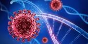 اگر این ژن را داشته باشید به صورت طبیعی ویروس کرونا را مهار میکنید!