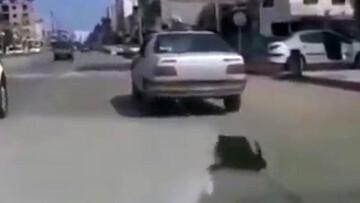 ویدیو دلخراش از حیوان آزاری توسط دهیار در وسط خیابان! / فیلم