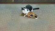 اردک زرنگی که برای فرار از چنگال گربه خود را به مُردن میزند! / فیلم