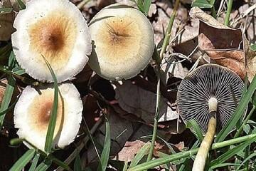 حقایقی جالب و خواندنی درباره قارچها که با شنیدن آن شگفتزده میشوید!