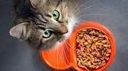 مرگ جنین ۹ ماهه بر اثر مدفوع گربه