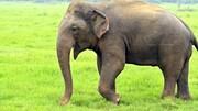 حقایقی جالب و خواندنی درباره فیلها که با شنیدن آن شگفتزده میشوید! / تصاویر