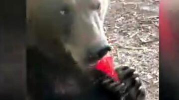 شیپور نوازی خرس با استعداد / فیلم