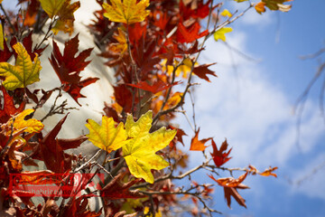 با این روشها در پاییز بیحوصله نمیشوید!