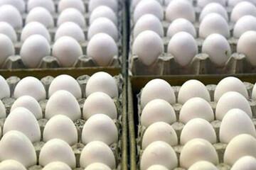 نرخ جدید تخممرغ ۱۷ مهر ۱۴۰۰ اعلام شد