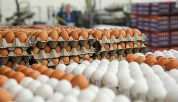 عرضه تخم مرغ در بازار با قیمت شانهای ۴۲۵۰۰ تومان