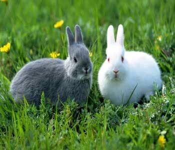 حقایقی جالب و خواندنی درباره خرگوشها که با شنیدن آن شگفتزده میشوید! / تصاویر