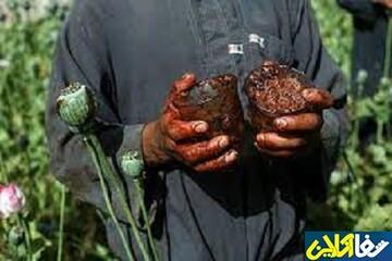 تریاک در صدر مصرف ایرانیان