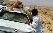 تصادف هولناک پژو با شتر در گنبدکاووس / ۴ نفر کشته و مصدوم شدند + عکس