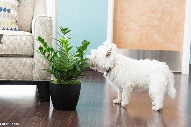 سمیترین و خطرناکترین گیاهان آپارتمانی