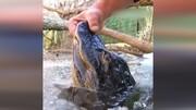 ترفند جالب و عجیب تمساحها برای زنده ماندن در دریاچه یخ زده / فیلم