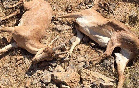 شیوع طاعون در ۳ استان تایید شد