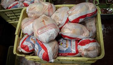شیوع آنفولانزای مرغی در خوزستان و شمال کشور / مرغ گران میشود؟