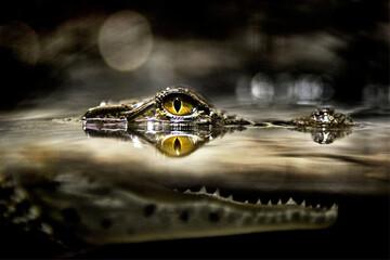روش جالب تمساحها برای زنده ماندن در دریاچه یخزده! / فیلم