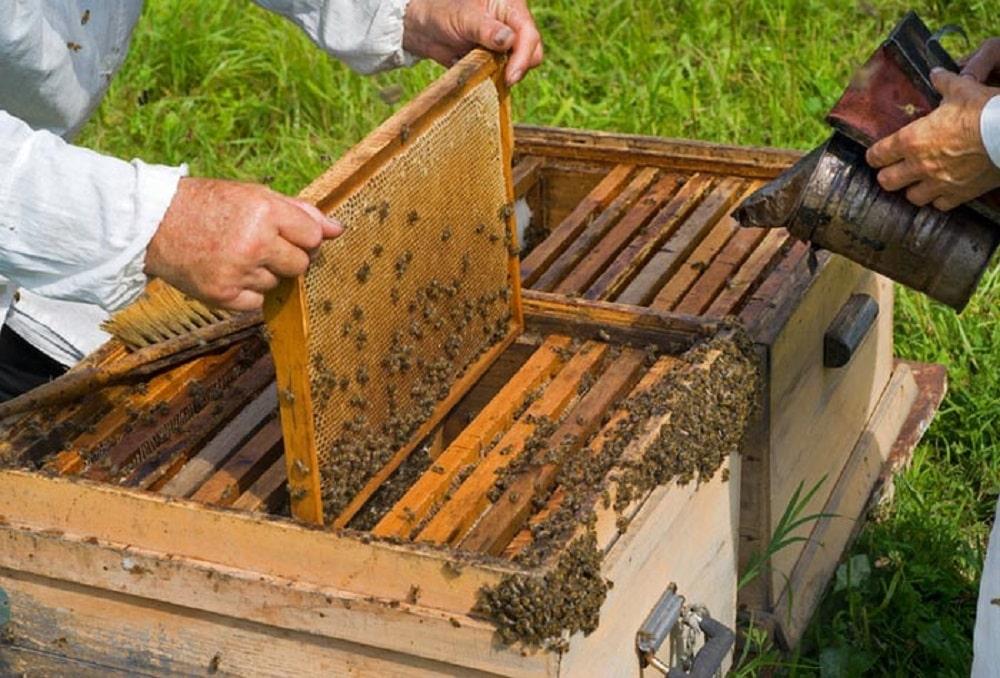 شروع زنبورداری از صفر