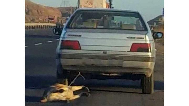 دستگیری سگکش تهرانی